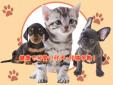 犬猫の専門店べべ