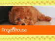 エンジェルハウス(AngelHouse)